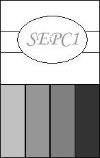 SEPC1 copy