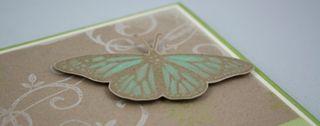 Elegant papillon_close up